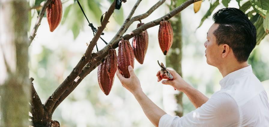 Fu Wan Chocolate