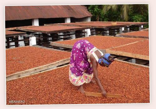 Menakao Drying Beans