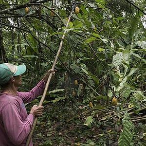Luisa A grower
