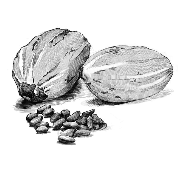 Chocolate Coated Cocoa Beans